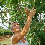 Marija picking figs