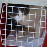 Baggy in cat box