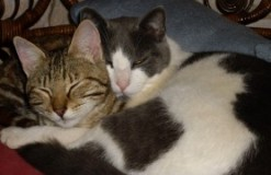 Baggy & Tally curled up together