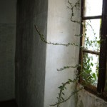 ivy grew in the small bedroom window, Kovaci, Istria