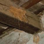 swallow's nest on beam in Kovaci, Istria
