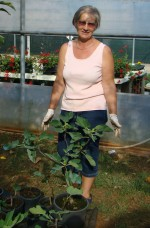 Dragica and her beautiful baby fig trees