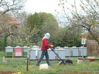 Beekeepr mowing his lawn in Kovaci, Istria