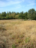 Dried out field in Istria