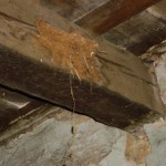 Swallow's nest in attic