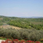 Panoramic view from house over vineyards at Baredine in Istria