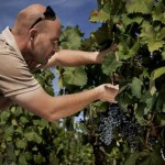 Ivan Damjanic and his vines in Istria